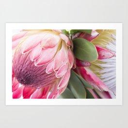 Fynbos Botanical Collection 2 Art Print