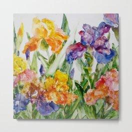 Multicolored iris Metal Print