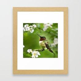 Hummingbird Flora Framed Art Print