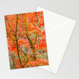 Japanese Maple in autumn Stationery Cards