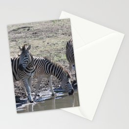 Zebra at the watering hole Stationery Cards