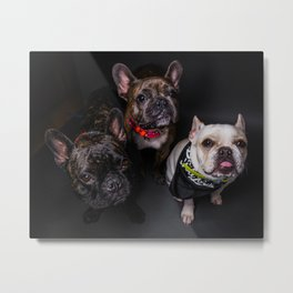 The French Bulldogs Metal Print