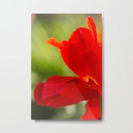 Long Stem Red Rose Metal Print