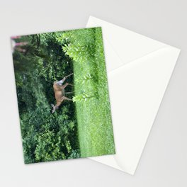 Caught Unaware (Deer) Stationery Cards