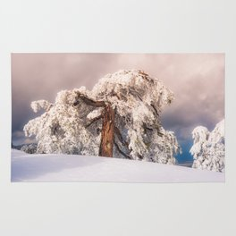 Frost Covered Pine Rug