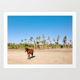 Wild horse on a beach with palm trees Art Print