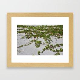 Railroad Vines on Boca II Framed Art Print