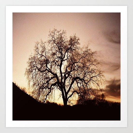 The Tree of Life... Art Print