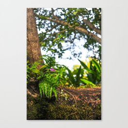 Orchid, Tree, Moss and Beauty Canvas Print