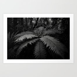 Fern in the Forest, New Zealand Art Print