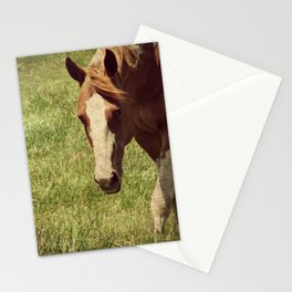 Paint Horse Mare Stationery Cards