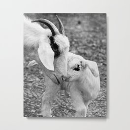 Mother's Love   Goat Photography Metal Print