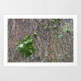 Bark with moss Art Print