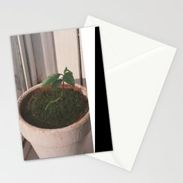 kumquat seedling 2017 Stationery Cards