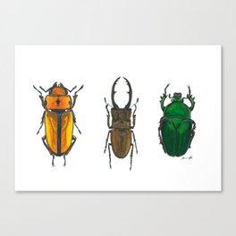 Illustration of Three Beetles Canvas Print