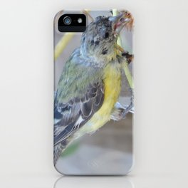 Lesser Goldfinch after Sunflower Seeds iPhone Case