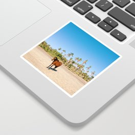 Wild horse on a beach with palm trees Sticker