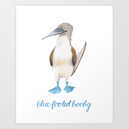 Blue Footed Booby Bird in Watercolor Art Print