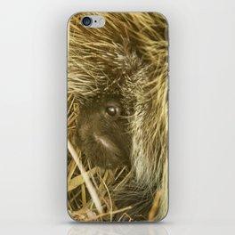 Porcupine Hiding iPhone Skin