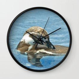 Humboldt penguin (Spheniscus humboldti) Wall Clock