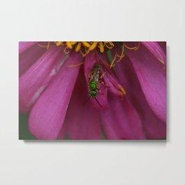 Green Sweat Bee Metal Print