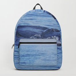 Tropical whale: The Bryde´s whale Backpack