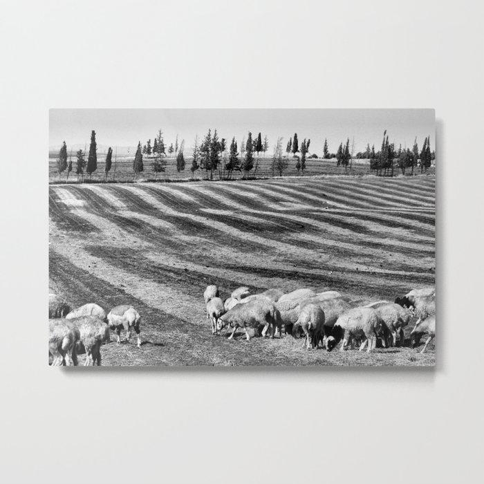Sheeep Metal Print