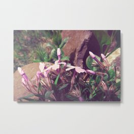 lila buds look up to the sky Metal Print