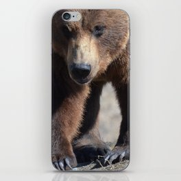 Alaskan Grizzly Bear - Spring iPhone Skin