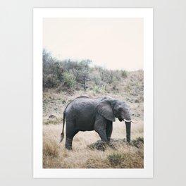Momma elephant Art Print