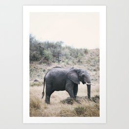 Momma elephant Art Print