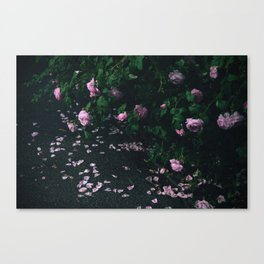 The smell after the rain Canvas Print