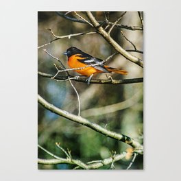 Oriole ~ Ginkelmier Inspired Canvas Print