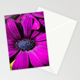 Purple Osteospermum Flower Stationery Cards
