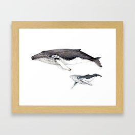North Atlantic Humpback whale with calf Framed Art Print