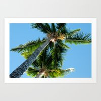 More Palm Trees Photo Print Art Print
