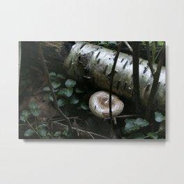Mushroom Cap Spruce Metal Print