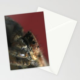Spider on Red Stationery Cards