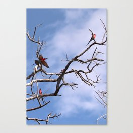 Southern Carmine Bee-eaters Canvas Print