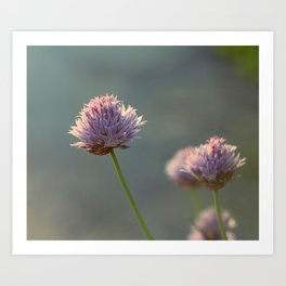 Sunny Chives Art Print