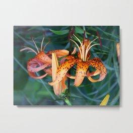 Tiger lily #1 Metal Print