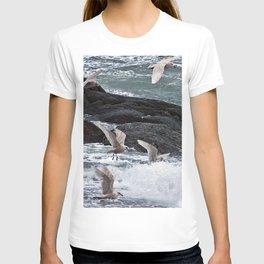 Gulls shop for Dinner T-shirt