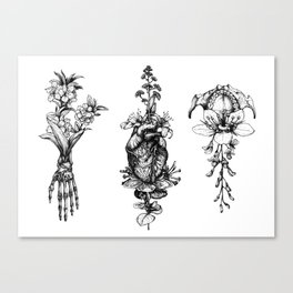 In Bloom - herbarium Canvas Print