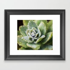 Dew Drop Petals Framed Art Print
