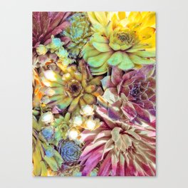 Bright Garden Succulents Canvas Print