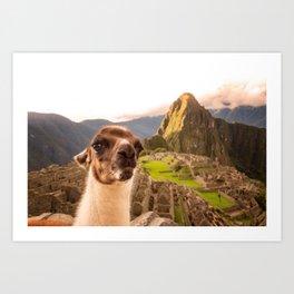Llama #selfie Art Print