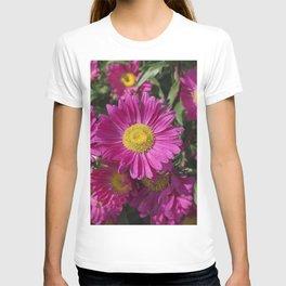 Summer Asters 4636 T-shirt