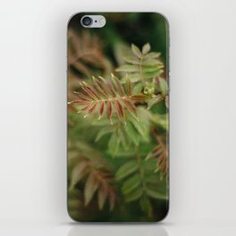 Mountain Ash iPhone Skin