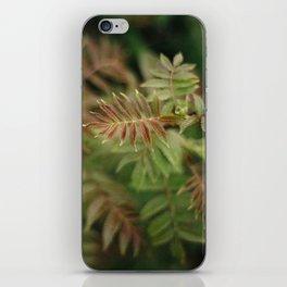 Mountain Ash iPhone Skin