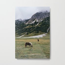 Horses in the Austrian highlands Metal Print